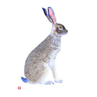 動物イラスト 野ウサギ