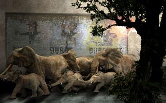 """LA FETE DU MARULA. """"Premier groupe composé de 7 éléphants. Le marula est cet arbre qui produit des fruits qui se gorgent d'alcool au coeur de la saison sèche.""""(Vdb). Visuels VdB, Xao."""