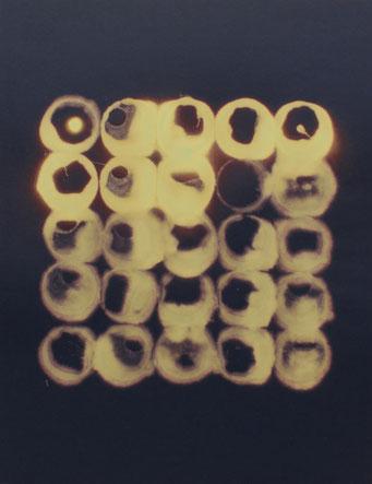 Toxic - lavis - 2013