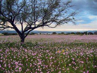 Arbol-flores Norma Suárez fotógrafa