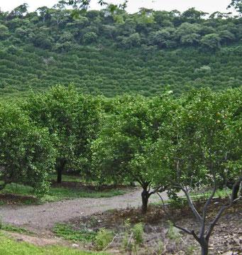 Naranjos, Morelos
