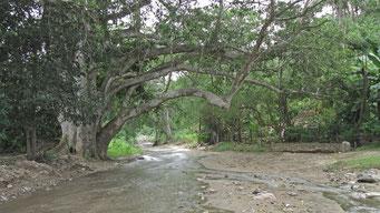 www.palapaganesh.com
