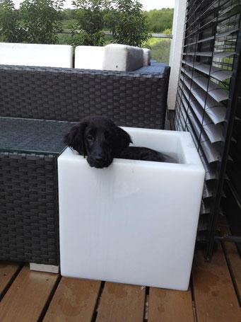 Zu Besuch bei Gerrit in Trier. Es war sehr warm und Emma ist in den Flaschenkühler geklettert.