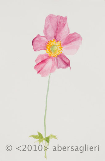"Anemone Hybrida, watercolor on paper, 7""x9"", 2010"