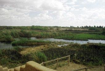 Azraq Wetland midden in de dorre woestijn in het nooroosten