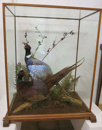Faisans de chasse (diorama) - 480 €