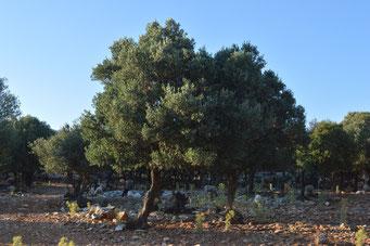 Landschaft, Naxos