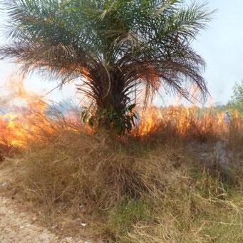 Feuerrodung des Baugeländes