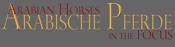 Arabische Pferde In The Focus
