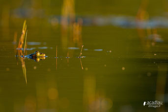 Stages photos nature en Loir-et-Cher, Loiret, Touraine avec Focus Nature ©Alex Roubalay - www.acadiaudimages.fr