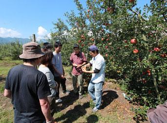 峯村農園にてりんご狩り