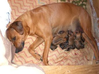 Paula mit ihren 12 Babys