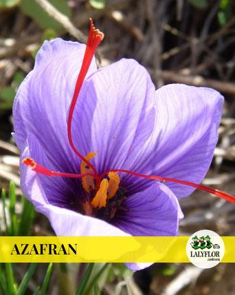 AZAFRAN EN TENERIFE