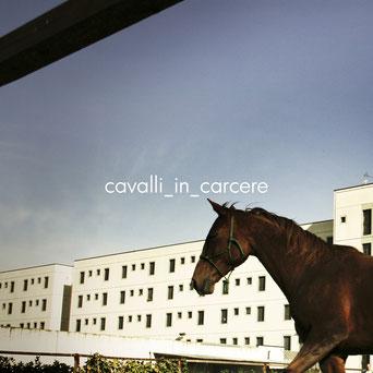 cavallo-carcere-bollate-reportage