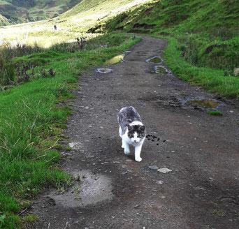 meine Lieblings-Katze,Talisker Bay