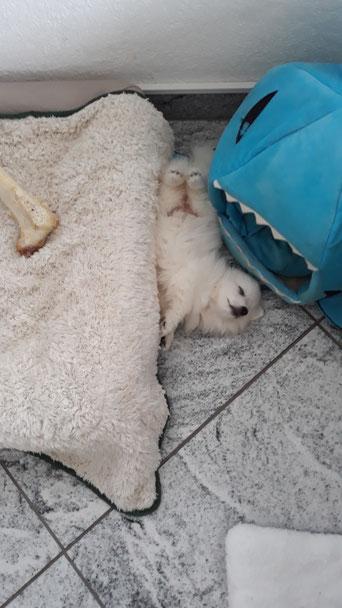Chiana im tiefschlaf :-)