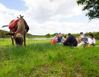 Les ânes de Madame - Balades accompagnées en Sologne, Val de Loire, châteaux de Chambord, Cheverny, Villesavin, du Moulin - Pique-nique nature en famille et entre amis