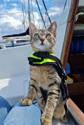 Unfassbar stolz auf diese kleine mutige Katze!