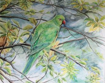 Vogel im Ast - Aquarell - 37x47cm - 50x60cm