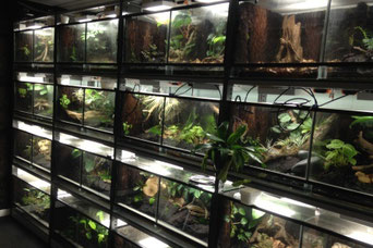 Terrarium showroom Gelderland