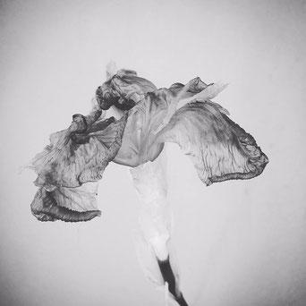Photographie de  Marie RAFALLI parue dans   Haïshas- Graines de Vent N° 6
