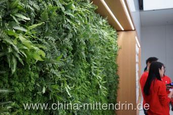 Innere Werte. Zum Beispiel die grüne Wand mit echten Pflanzen! Ein bisschen Grünzeug in einem Apple Store gilt hier schon als Revolution.