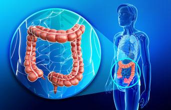 Darmgesundheit und Neurodermitis