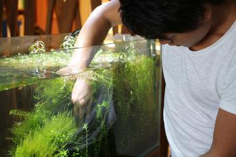 水草のトリミング