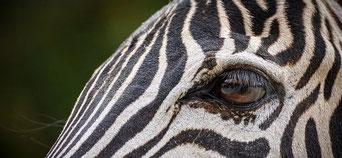Coaching Haut potentiel, zèbres, hypersensibilité