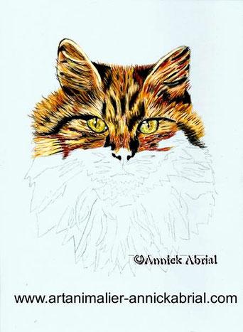 portrait aux pastels secs d'un chat, portrait aux pastels secs d'après photo, portrait animalier, portrait d'un chat