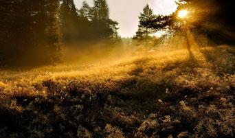Waldbaden: Hans Fabian
