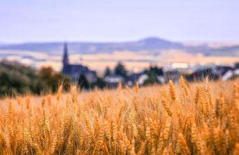 Neumarkt liegt schön in der Oberpfalz eingebettet (Quelle: Pixabay)