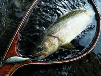 岩魚 Redeye 52R
