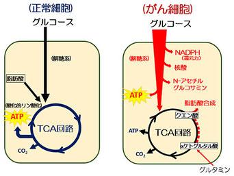 正常細胞とがん細胞