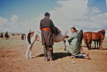 馬の乳搾りは仔馬を近づけて(1985年6月ウブルハンガイ県)