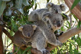 Bild von Australian Reptile Park