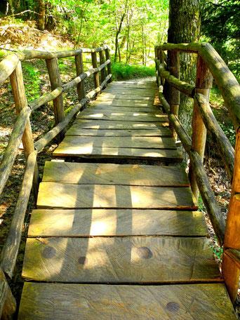 Holzbrücke in der Schlucht von Drymonas, Euböa