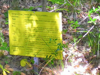 Lehrtafel auf Waldpfad-Drymonas, Euböa