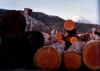 von meinem luftigen Schlafplatz aus - der Blick auf den Fuji-yama