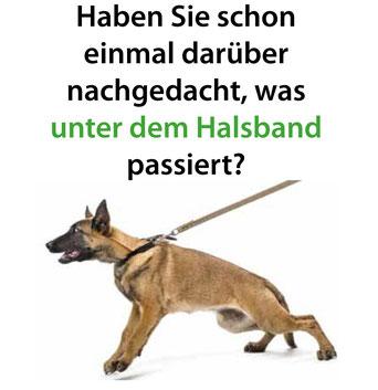 Das Hundehalsband und mögliche gesundheitliche Schäden