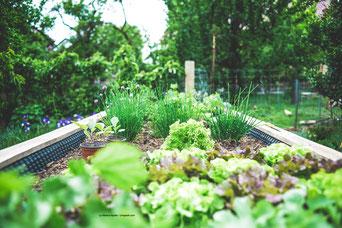 Urban Gardening wird in Städten immer beliebter. Next Level in professionell wäre Urban Farming in den Städten.