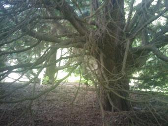 Bis ein Baum so viel Schatten wirft (und Sauerstoff produziert usw) dauert lange, stimmt dann die Rechnung mit der Ausgleichsfläche noch?