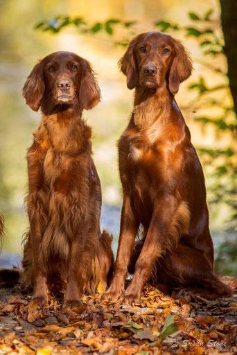 Annie (6 J.) mit Sohn Coppersheen Erasmus (11 Mte)