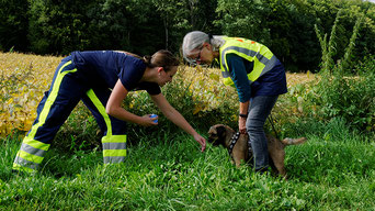 Zur Not auch ohne Geruchsträger: Border Terrier Basko nimmt den Geruch über die Hand der Person auf, die er gleich suchen wird.