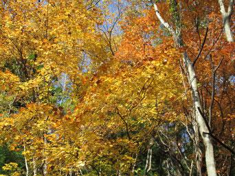 福島市土湯温泉の紅葉です。