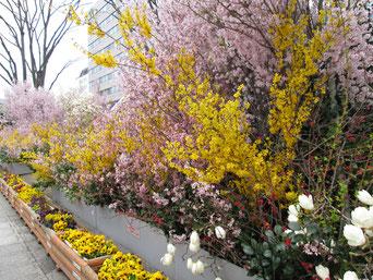 福島駅東口側の花時計は、更に花が飾られます。