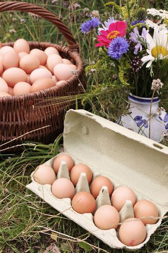 Eier Hühnereier Bioeier Bauernhofeier