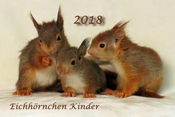 Eichhörnchen Kalender Fotokalender Charity