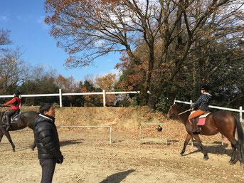 広い馬場で、のびのびと馬を自由に動かす楽しさを時間できるレッスン。できるレッスン