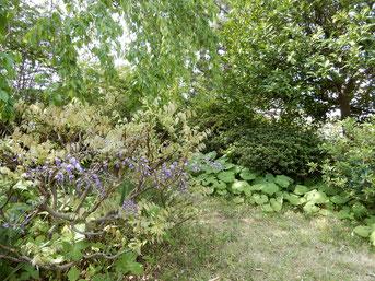 事務所の庭の新緑